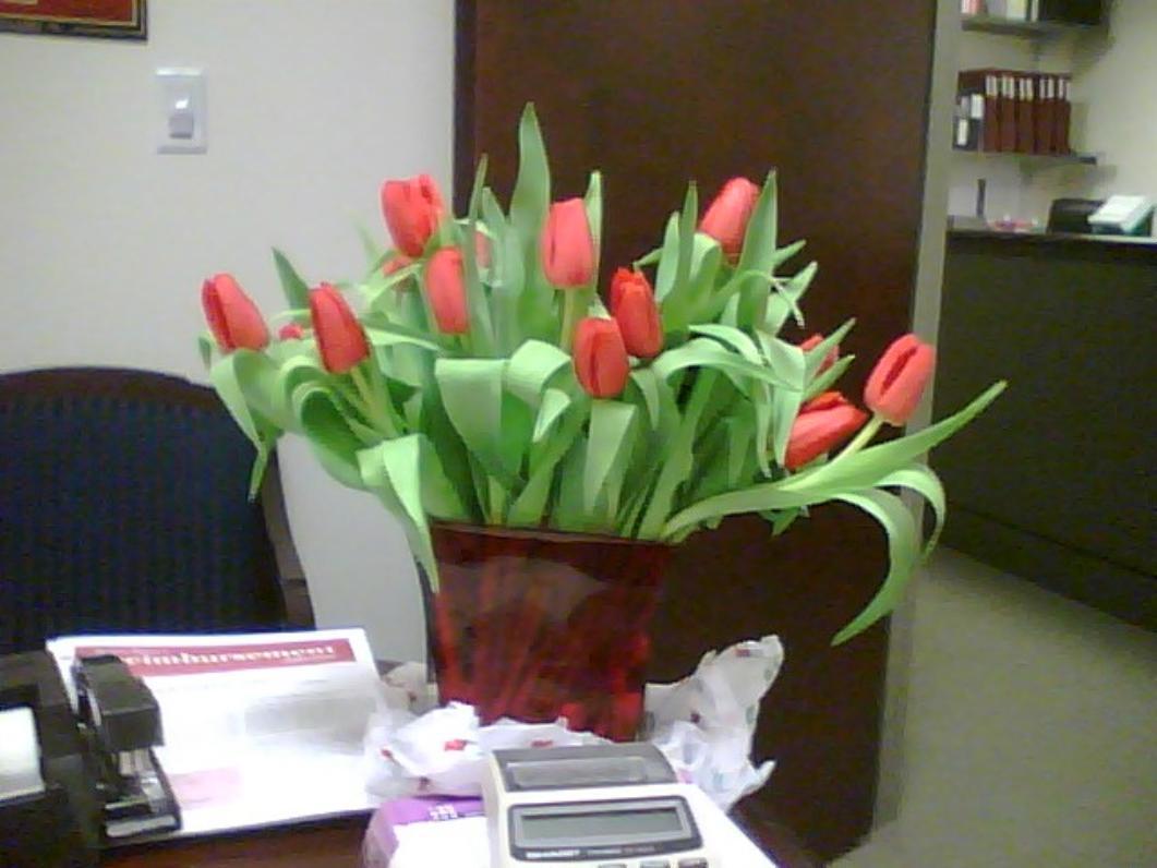 2008_tulips